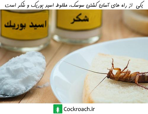 ترکیب اسید بوریک و شکر برای ساخت سم سوسک خانگی