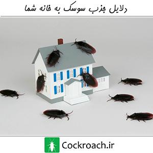 دلایل جذب سوسک به خانه شما